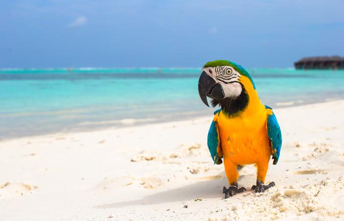 maldives_4
